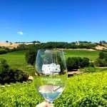 Grape tasting in Sonoma County