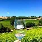 Grape tasting in Sonoma County